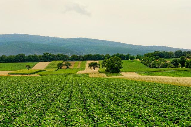 zemědělská krajina.jpg