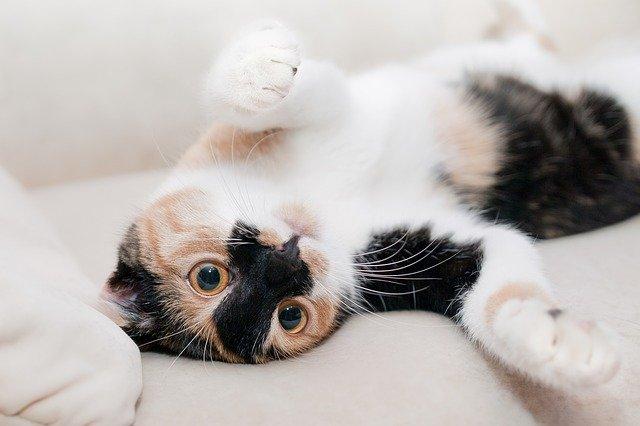 Kočka ležící na zádech